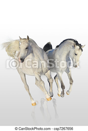 two arab horses - csp7267656