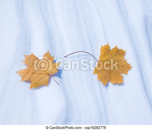 Two autumn leaves on snow in the winter - csp16282779