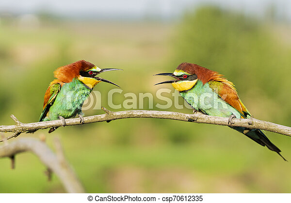 two beautiful colorful birds on a branch communicate - csp70612335