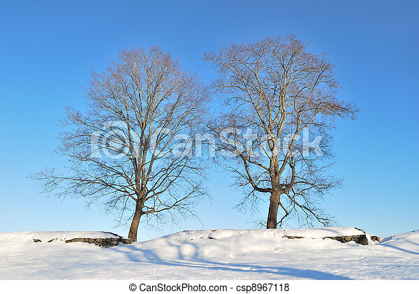 Two beautiful trees - csp8967118