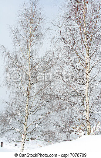 Two birch trees in winter - csp17078709