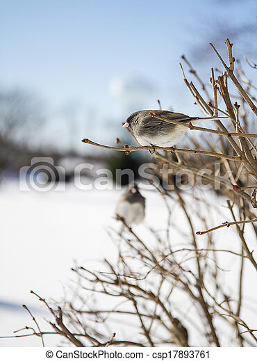 Two Birds on a Branch - csp17893761