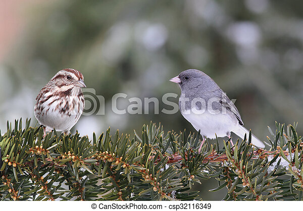 Two Birds On A Branch - csp32116349