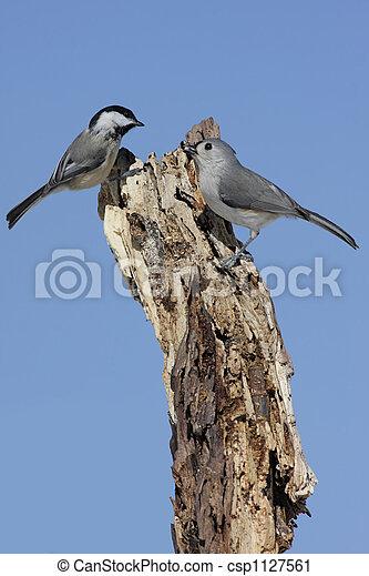 Two Birds On A Stump - csp1127561