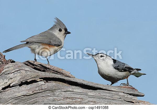 Two Birds On A Stump - csp1491088
