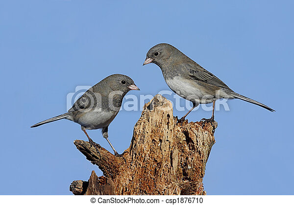 Two Birds On A Stump - csp1876710