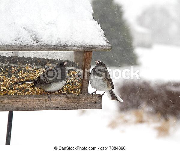 Two Birds on Feeder Snowstorm - csp17884860