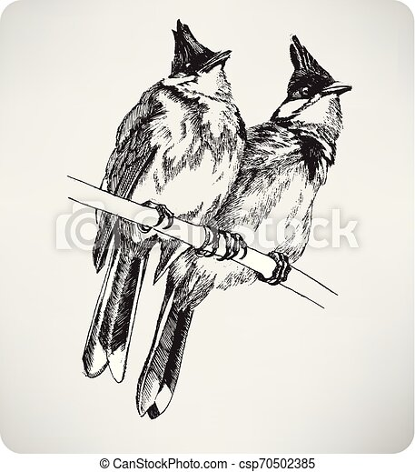 Two birds on the branch, hand drawing, vector illustration - csp70502385