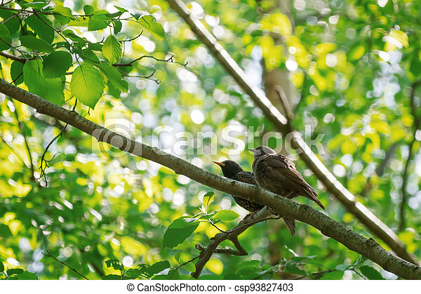 Two birds sitting on a branch - csp93827403