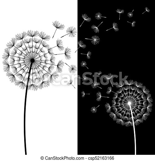 Two Black And White Dandelions Blowing