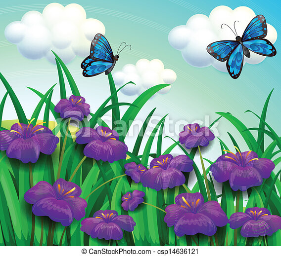 Two Blue Butterflies At The Garden With Violet Flowers Vector