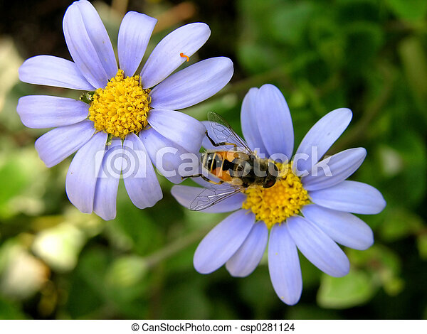 Two Blue Flowers And Bee Two Blue Flowers Yellow Center Bee Wing