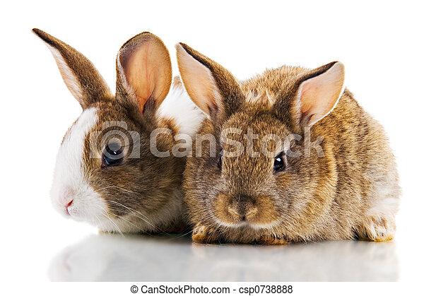 Two Bunnies - csp0738888