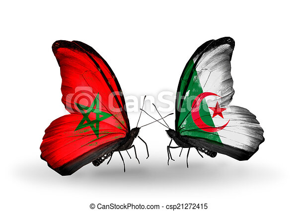Two butterflies with flags on wings as symbol of relations Morocco and Algeria - csp21272415