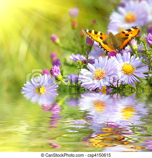 two butterfly on flowers with reflection - csp4150615