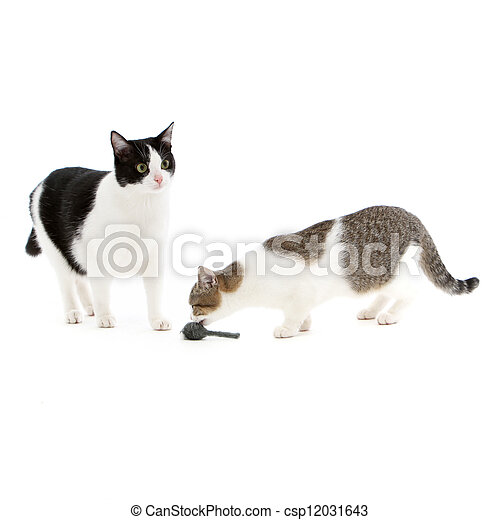 Two cats playing with a toy mouse - csp12031643