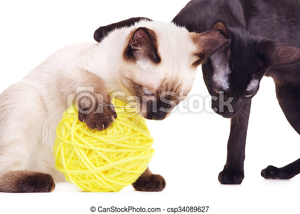 Two Cats Playing With Woolen Ball - csp34089627