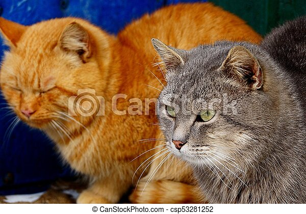 two cats sit together on the street