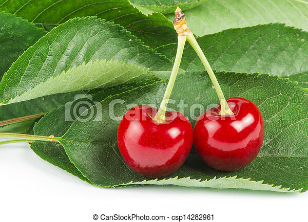 Two Cherries and branch with leaves - csp14282961