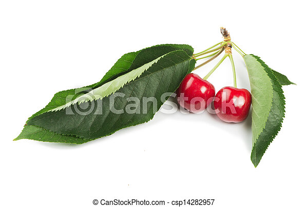 Two Cherries and branch with leaves - csp14282957