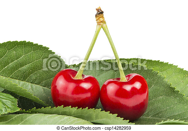 Two Cherries and branch with leaves - csp14282959