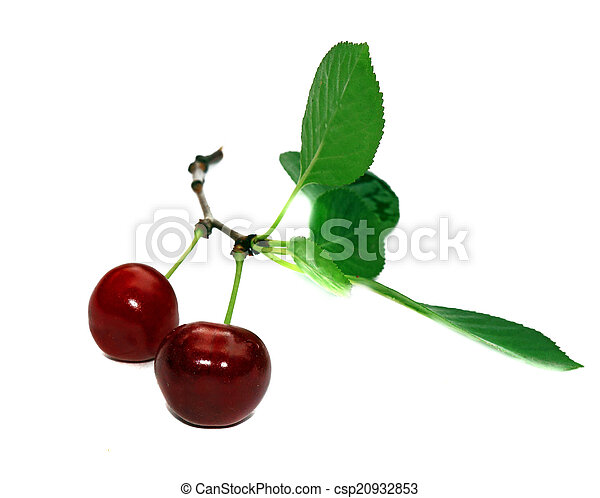 Two cherries on a branch with leaves isolated - csp20932853