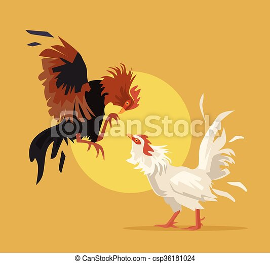Two cocks fighting - csp36181024