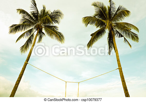 Two coconut trees bind  - csp10079377