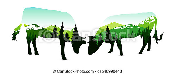 Two cows with panorama of mountains. - csp48998443