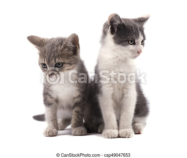 Two Cute Grey Kittens Isolated On White Background Two Small Cute Grey Kittens Isolated On White Background