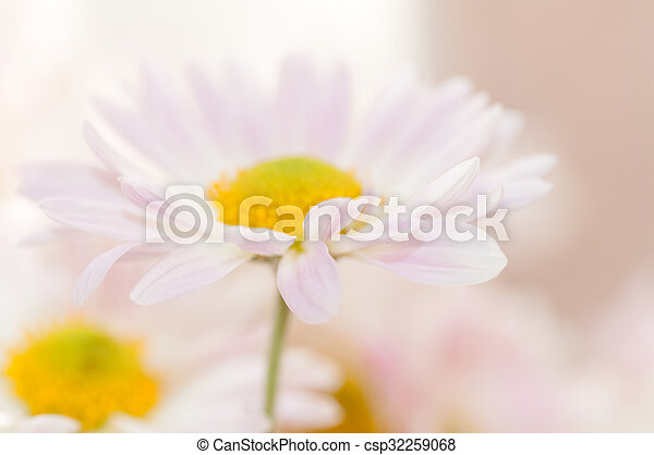 two daisies on a light background - csp32259068