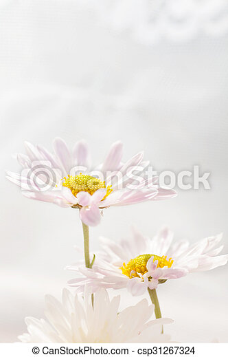 two daisies on a light background - csp31267324