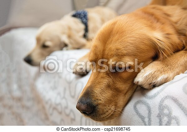 Two dog lying on the bed - csp21698745