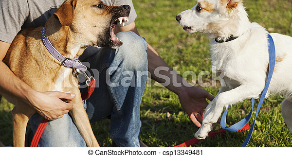 Two Dogs and Trainer Playing in Park - csp13349481