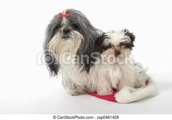 Two Dogs Sitting On A Santa Hat - csp0461428