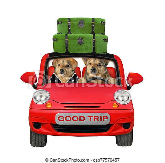 Two dogs travel in red car - csp77570457