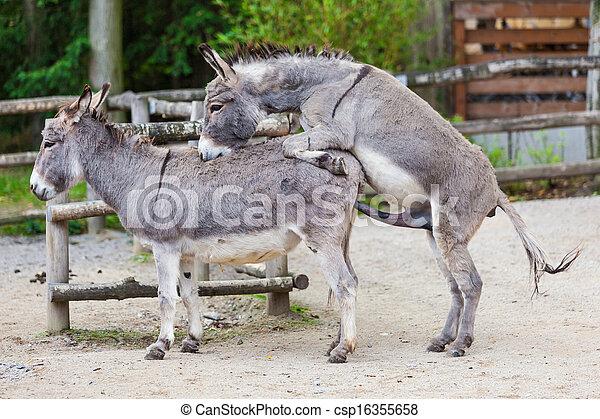 Donkeys sex
