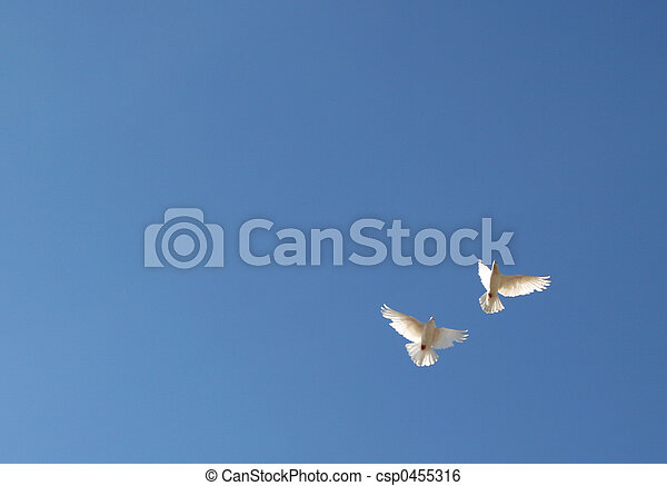 two doves in the sky - csp0455316