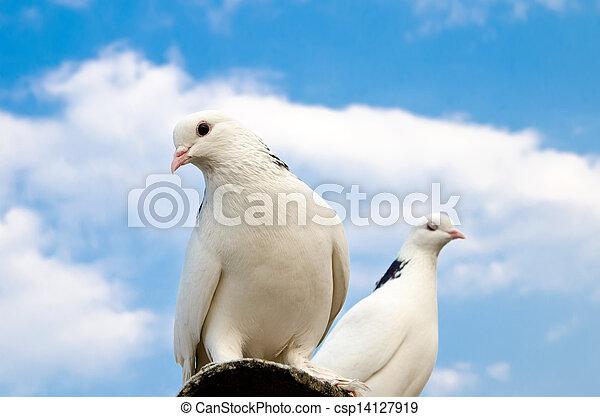 two doves - csp14127919