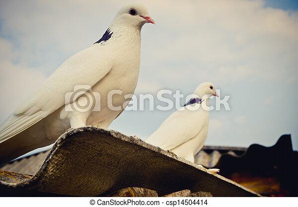 two doves - csp14504414
