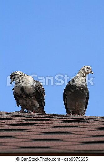 Two doves - csp9373635
