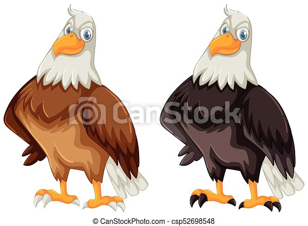 Two eagles with brown and black feather - csp52698548