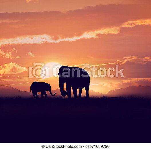 Two elephants at sunset - csp71689796