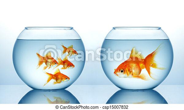 Two fishbowls  - csp15007832