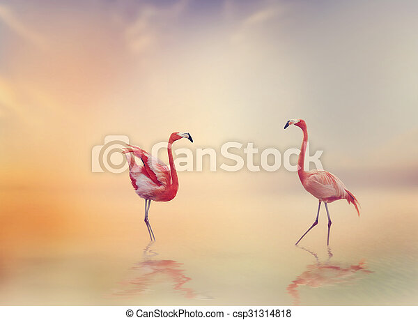 Two Flamingoes at Sunset - csp31314818
