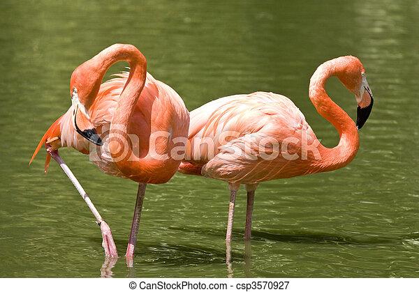 two flamingos - csp3570927