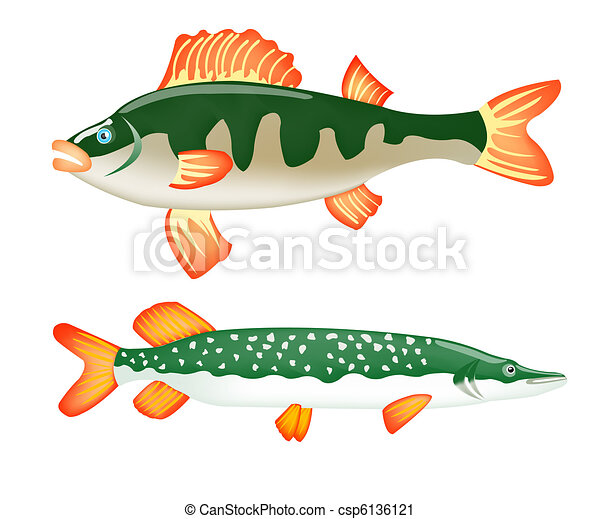 Two freshwater fish perch and pike - csp6136121