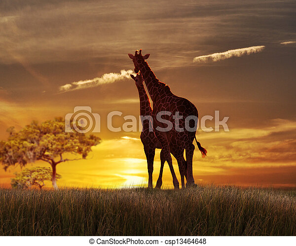 Two Giraffes At The Sunset - csp13464648