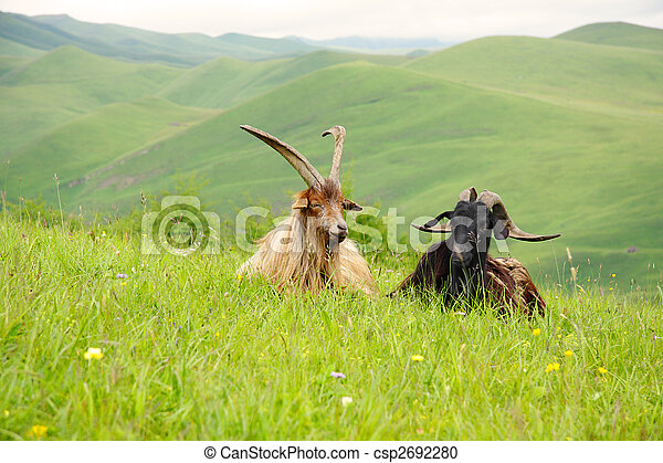 Two goats - csp2692280