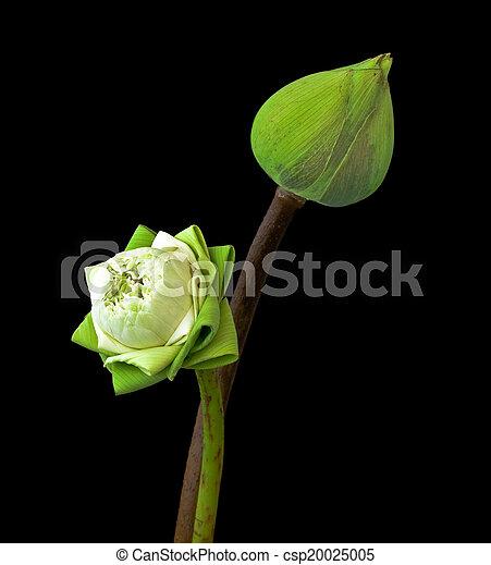two green lotus - csp20025005